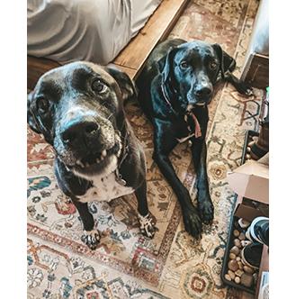Hanna's Dogs
